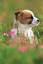 Preview iPhone wallpaper Cute puppy, grass, flowers, blurry