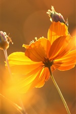 Preview iPhone wallpaper Flower under sun, glare