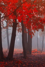 Preview iPhone wallpaper Forest in autumn, red leaves, trees, fog