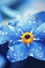 미리보기 iPhone 배경 화면 잊어-nots의 푸른 꽃 매크로 사진, 이슬