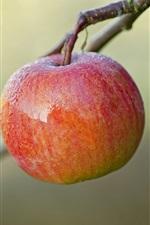 Fruit twigs, red apple, dew