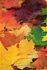 Golden autumn, colorful leaves, green, yellow, red