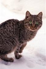 미리보기 iPhone 배경 화면 회색 줄무늬 고양이, 녹색 눈, 겨울, 눈