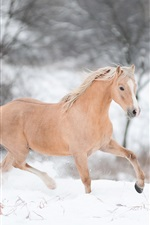 Preview iPhone wallpaper Horse running in winter