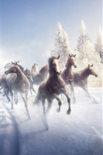 Preview iPhone wallpaper Horses in winter running