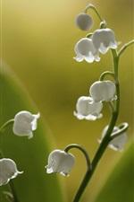iPhone壁紙のプレビュー 谷のユリ、白い小さな花