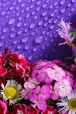 Lot of flowers, water droplets