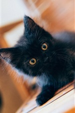 Preview iPhone wallpaper Lovely black kitten baby
