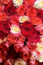 Preview iPhone wallpaper Many rose flowers, red and white