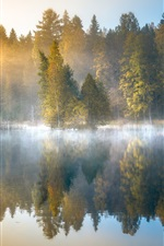 Preview iPhone wallpaper Morning forest, fog, lake, trees, autumn, Finland