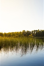 Preview iPhone wallpaper Morning sun, lake, reeds, boat, fishermen