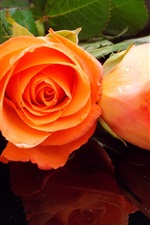 Preview iPhone wallpaper Orange rose flowers, bouquet, water drops