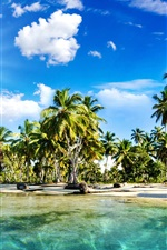 Preview iPhone wallpaper Palm trees, coast, beach, blue sky, clouds, sun rays