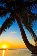 Preview iPhone wallpaper Palma, Maldives, sunset, beach, sea, palm tree