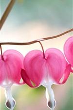 Preview iPhone wallpaper Pink Bleeding Heart Flowers