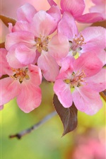 Preview iPhone wallpaper Pink cherry flowers, bokeh, twigs, spring