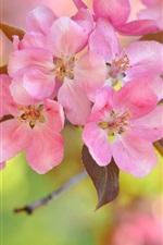 Pink cherry flowers, bokeh, twigs, spring