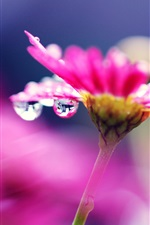 Preview iPhone wallpaper Pink flower macro photography, bright, water droplets, blurry