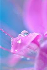 Preview iPhone wallpaper Pink flower macro photography, petals, dew