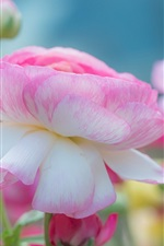 Preview iPhone wallpaper Pink petals peony flowers, macro photography