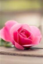 Pink rose, wood board, bokeh