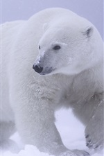 Preview iPhone wallpaper Polar bear, snow, cold
