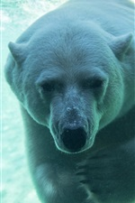 Preview iPhone wallpaper Polar bear underwater