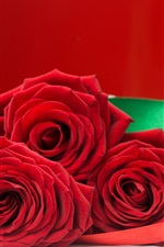 Red rose and gift, romantic
