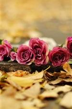 iPhone壁紙のプレビュー レッドは、地面に花をバラ