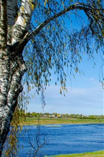 Preview iPhone wallpaper Russia nature landscape, river, birch, grass, blue sky