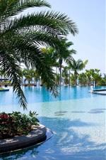 Sanya, recurso, piscina, palmeiras, mar, China