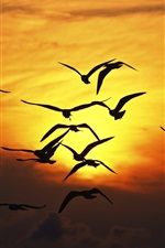 Preview iPhone wallpaper Seagulls flying at sunset