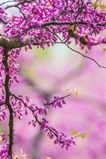 Preview iPhone wallpaper Spring, tree, branches, pink flowers