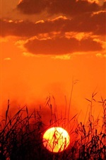 Preview iPhone wallpaper Summer grass in sunset, red sky, clouds