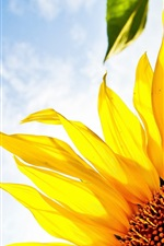 Preview iPhone wallpaper Sunflower, blue sky