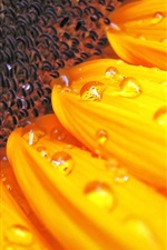 Preview iPhone wallpaper Sunflower macro photography, pistil, petals, water drops