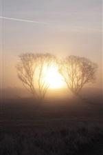 Sunrise morning, fog, trees, dawn