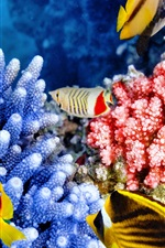 Preview iPhone wallpaper Tropical fishes, coral, underwater, sea animals