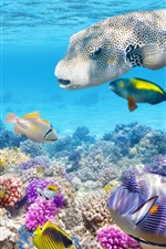 Preview iPhone wallpaper Tropical fishes underwater, coral reef, ocean