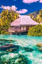 미리보기 iPhone 배경 화면 열 대 풍경, 야자수, 주택, 바다, 해변, 돌