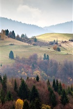 Preview iPhone wallpaper Ukraine, Carpathians, forest, trees, fog, morning