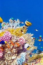Preview iPhone wallpaper Underwater world, coral, tropical fishes, colorful