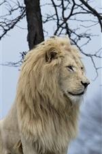 Preview iPhone wallpaper White lion, predator, mane