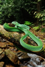 Preview iPhone wallpaper Wildlife, green snake, tree, stream