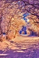 Winter, park at night, snow, trees, road, lights