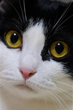 iPhone обои Желтые глаза кот, черный белый