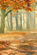 Preview iPhone wallpaper Autumn forest, trees, red leaves, sun rays, fog