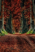 Preview iPhone wallpaper Autumn nature, road, trees, leaves