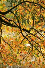 Preview iPhone wallpaper Autumn riverside, tree, twigs, yellow leaves