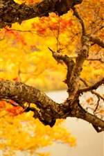 Preview iPhone wallpaper Autumn tree trunk, yellow leaves